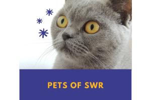 Pets of SWR: Dinger